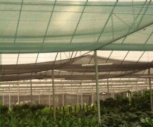 Agricultural shade sail flat thread shading net